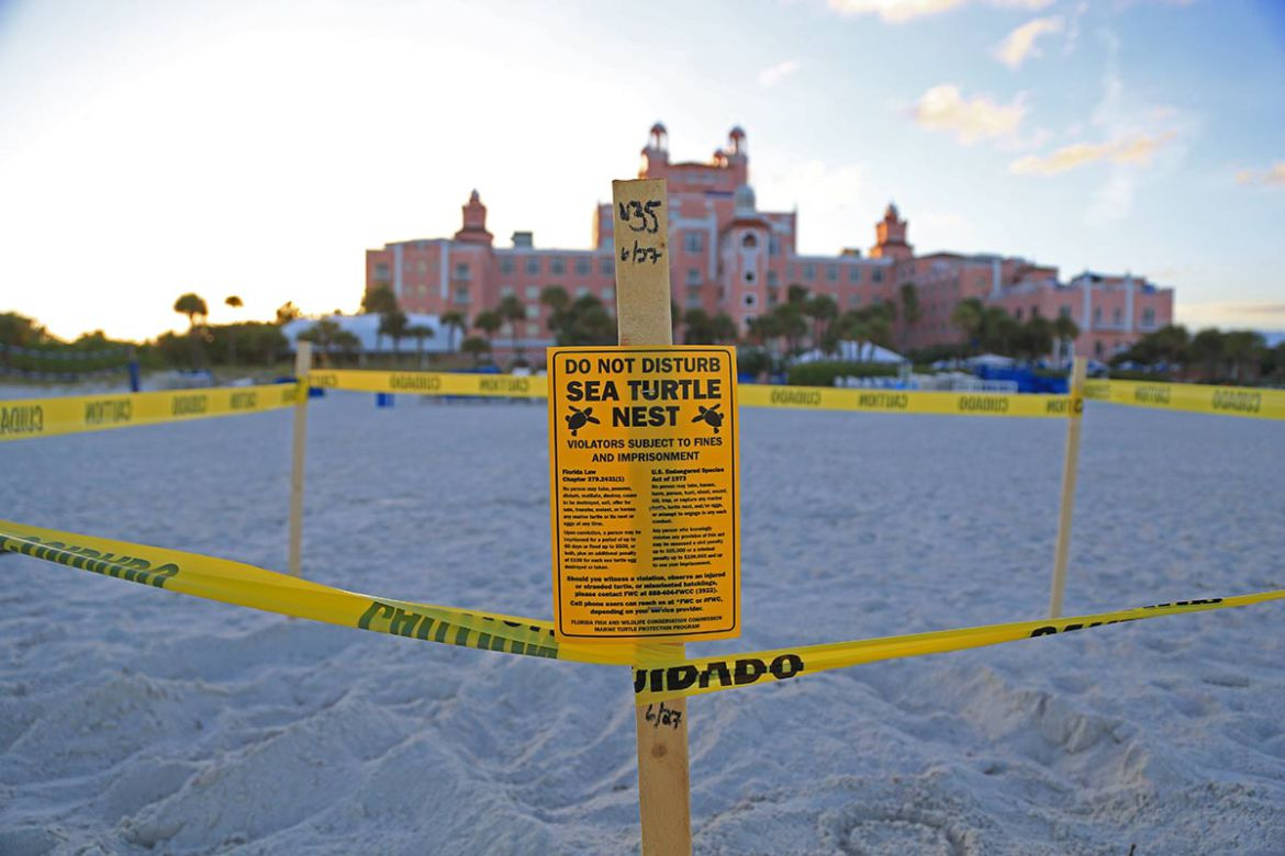 Sea turtle nest marked off with yellow tape on the beach in front of the Don CeSar hotel on St. Pete Beach, with the hotel in the background.