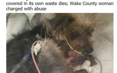 Josie the Yorkie's Abuser Is A NC Teacher