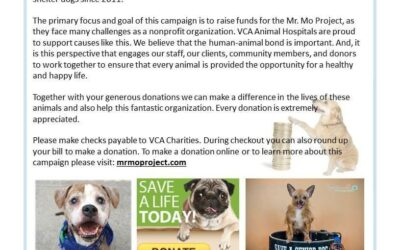 Pennies for Pets from VCA Charities