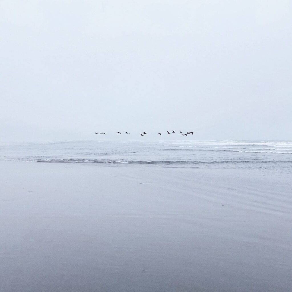 Socially distanced seagulls on Ocean Beach during COVID-19 coronavirus lockdown in San Francisco, CA. Photo: Kyle Legg, 49 Miles & The Cosmopolitan Man.