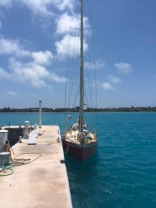 Puffin at dock in Bermuda