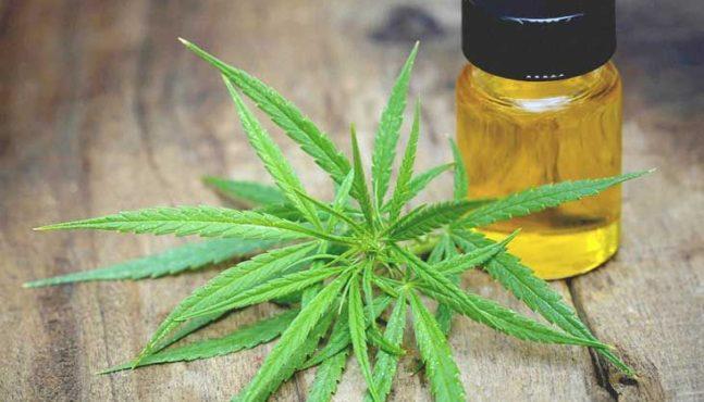 America's Marijuana Monopoly