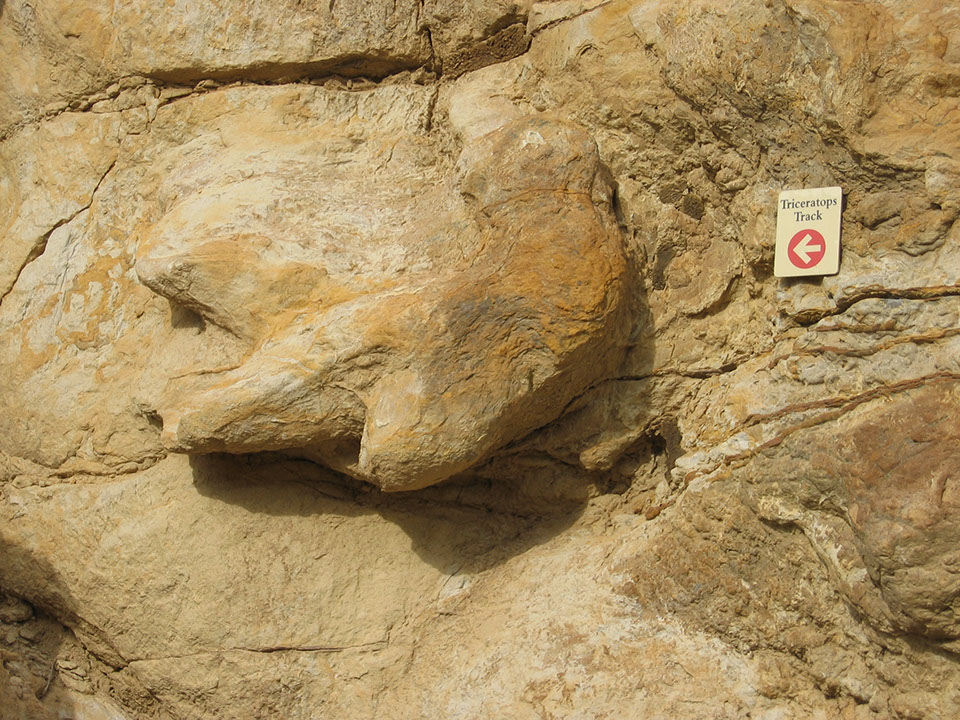 Picture of triceratops track discovered at Dinosaur Ridge