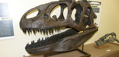 Picture of Dinosaur Ridge Discovery Center exhibits dinosaur skull