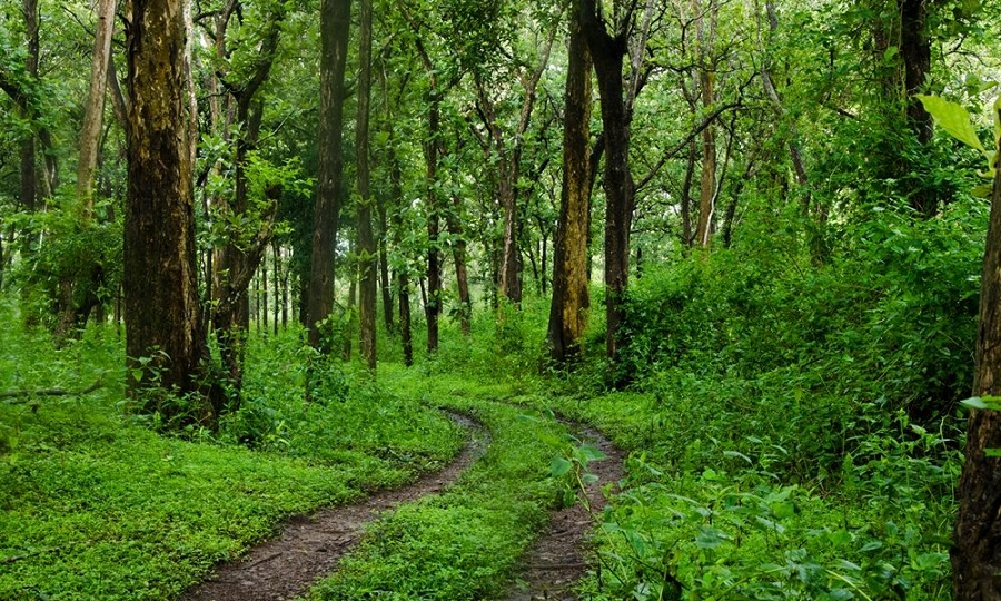 Karnataka Forest RFO Recruitment 2018
