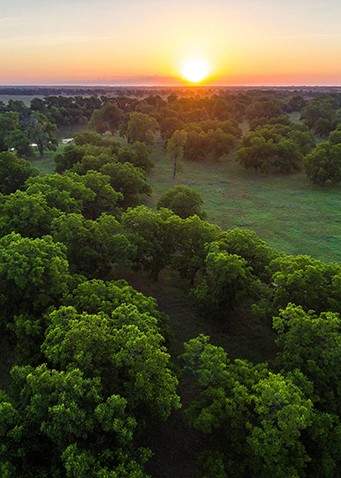 aerial view of sunset and green forests