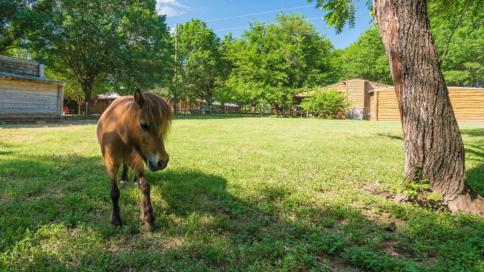 brown horse standing in grassy field near barn