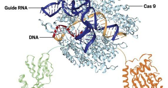 Công cụ CRISPR siêu chính xác được tăng cường nhờ thiết kế enzyme
