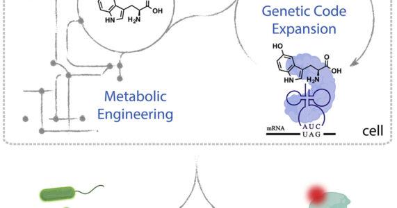 Amino acid số 21: Bước tiến mới trong sinh học tổng hợp