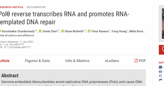 Khám Phá Mới Cho Thấy Tế Bào Người Có Thể Chuyển Chuỗi RNA Thành DNA