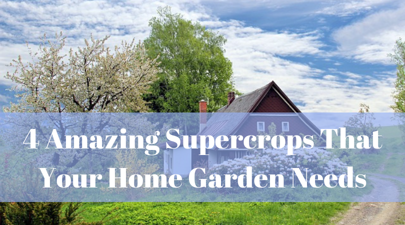 4 Amazing Supercrops That Your Home Garden Needs