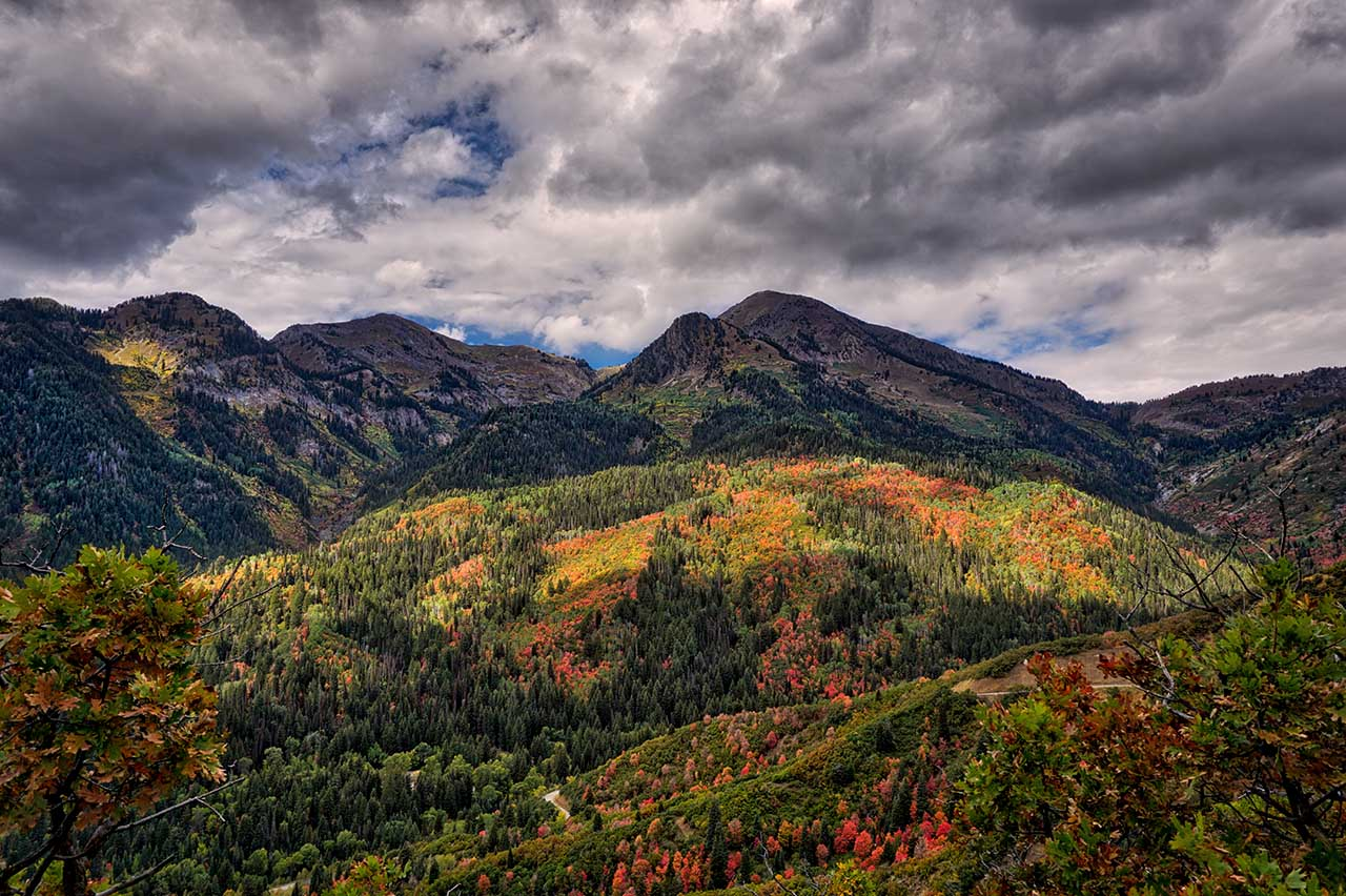 Aerial photo of Uinta National Forest in the fall.
