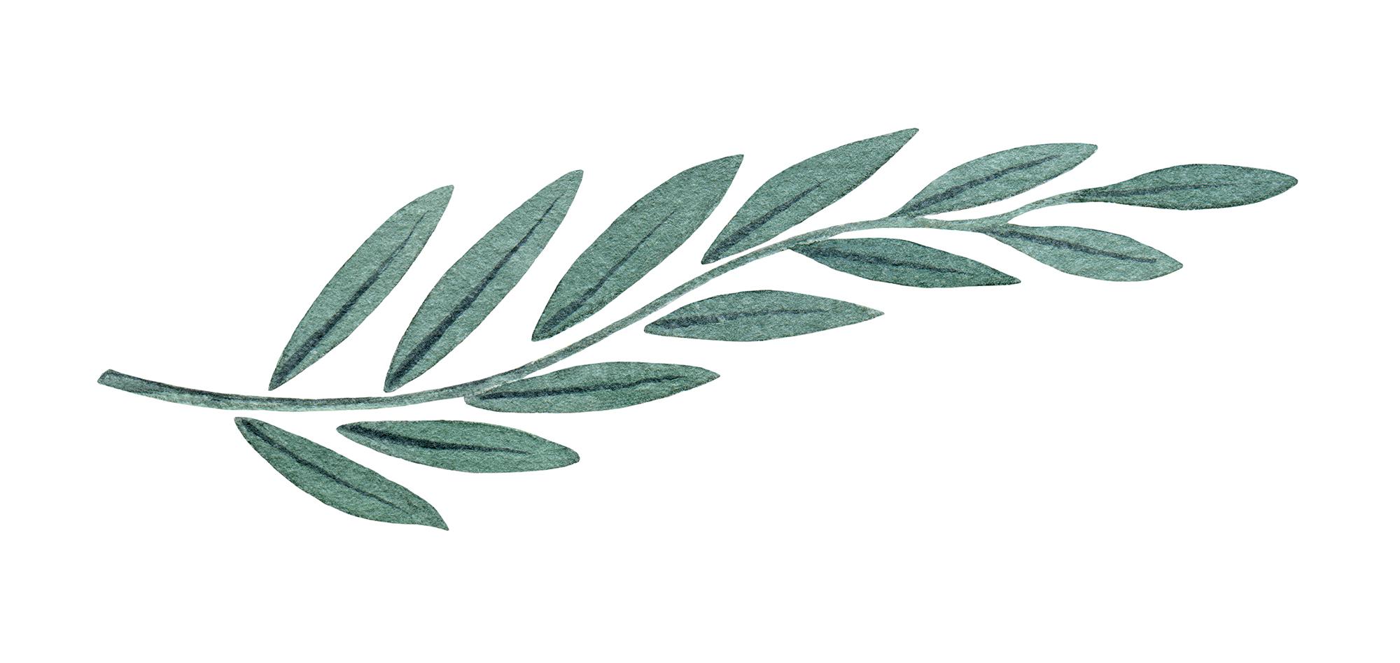 sideways view of herb