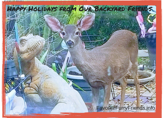 No Photo-shop here - Happy Holidays from Reindeer and Dino in Lafayette backyard