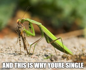 praying mantis valentines day love addiction