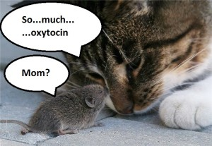cat-and-mouse