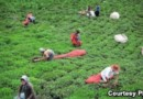 Fertile Soil Being Smuggled Out Of Iran On Large Scale