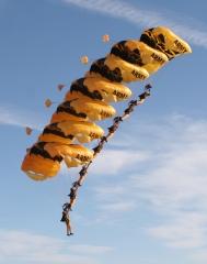 U.S. Army Golden Knights parachute team