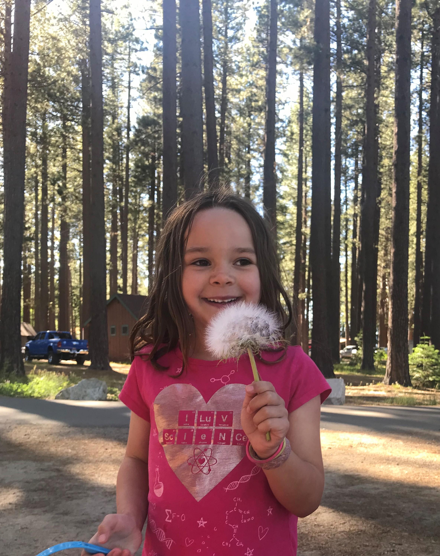 The magic of a dandelion puff