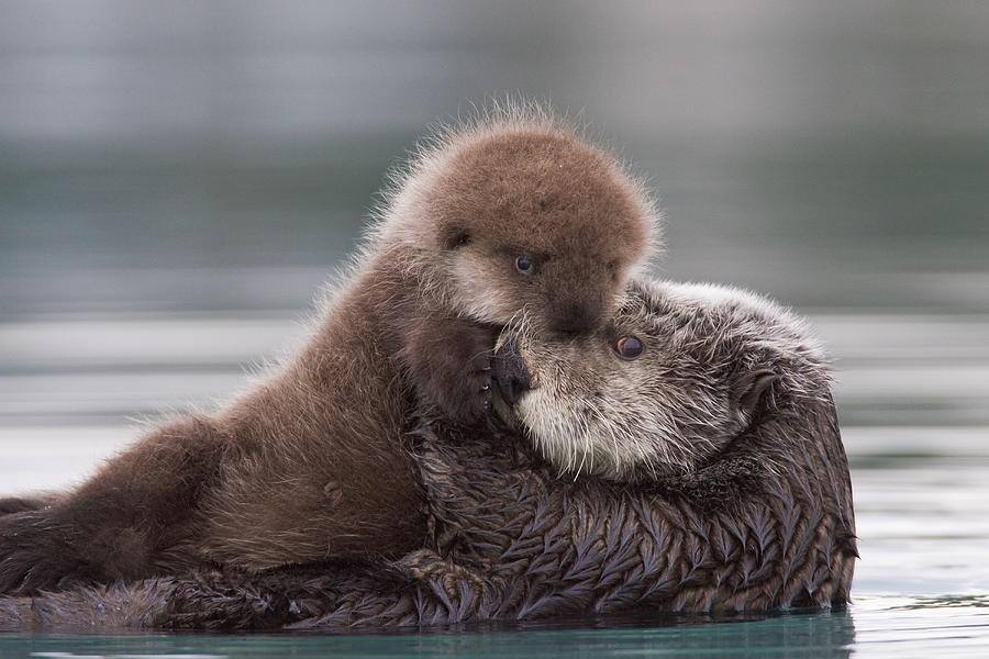 Otter Happiness: Swimming with Otters, Viral Videos, and a Crazy Contest