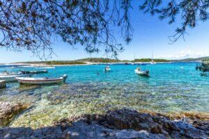 Swim Island