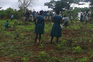 Clearing the land and planting the first crops.