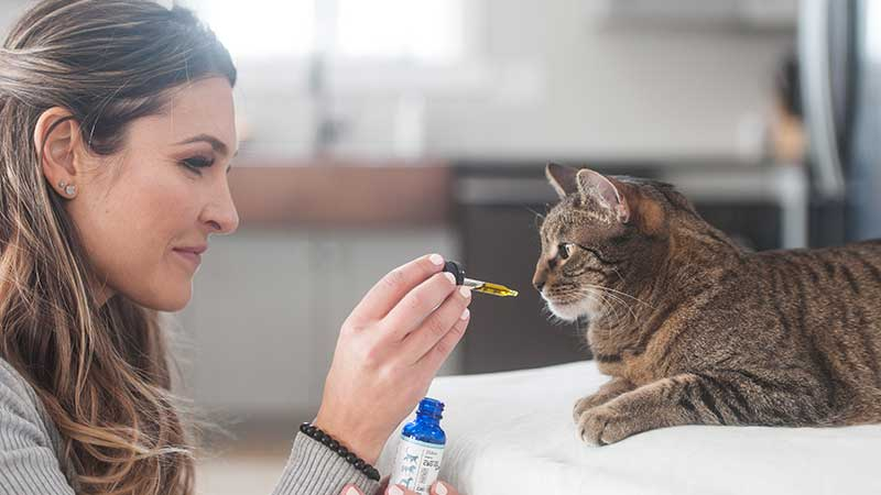 CBD for Pets - Cats & Dogs - Purity PET™ from Purity CBD™