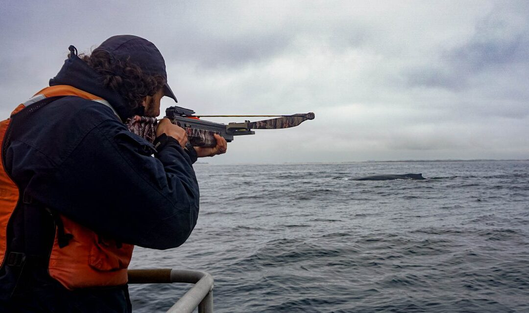 Local Monterey Bay Research Shows How Covid-19 Pandemic Affects Whale Stress