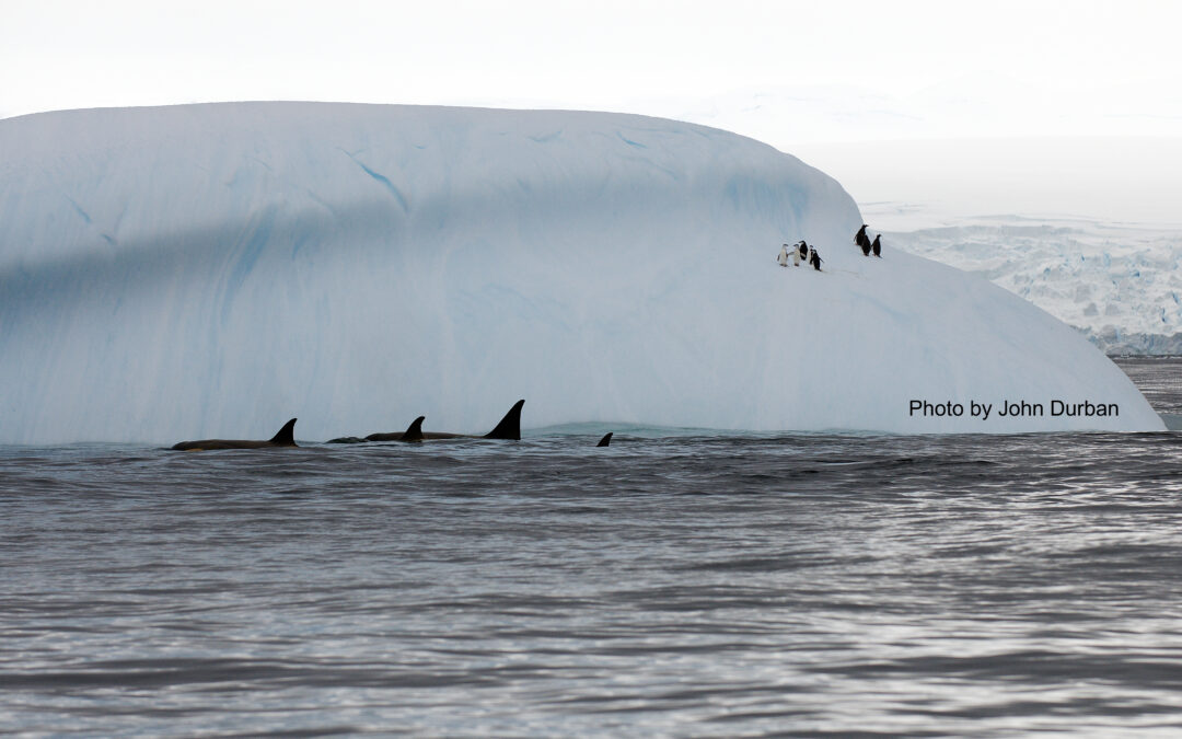 A 10-year study, just published, on Antarctic killer whale photo ID!