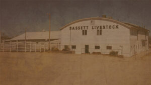 Special Bred Cow & Pair Auction @ Bassett Livestock Auction
