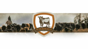 Special Calf & Yearling Sale @ Presho Livestock Auction