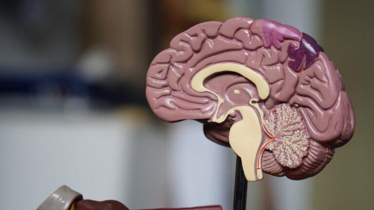 habits for brain health