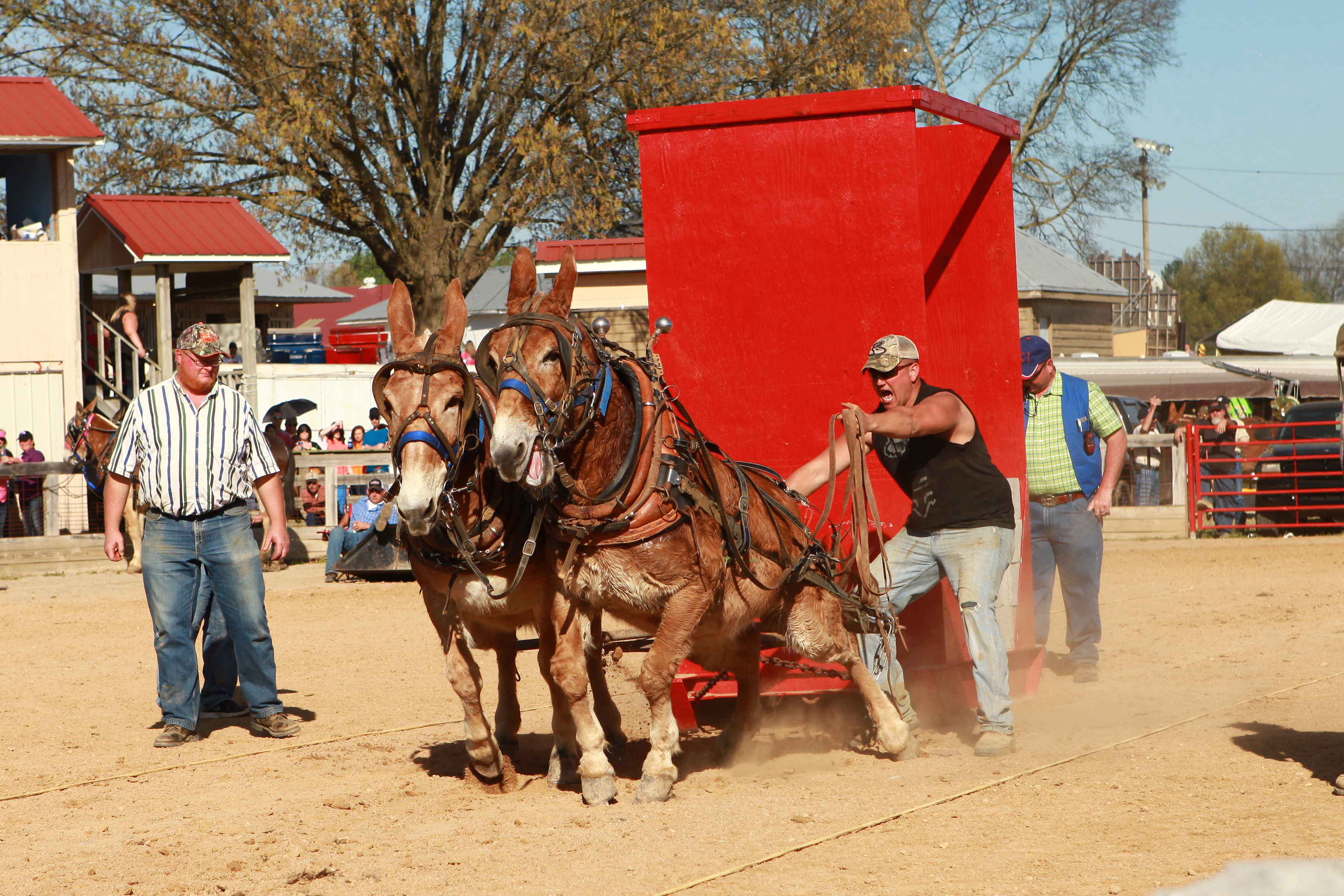 Mule Pulling Tennessee State Championship – Saturday 2:00 PM
