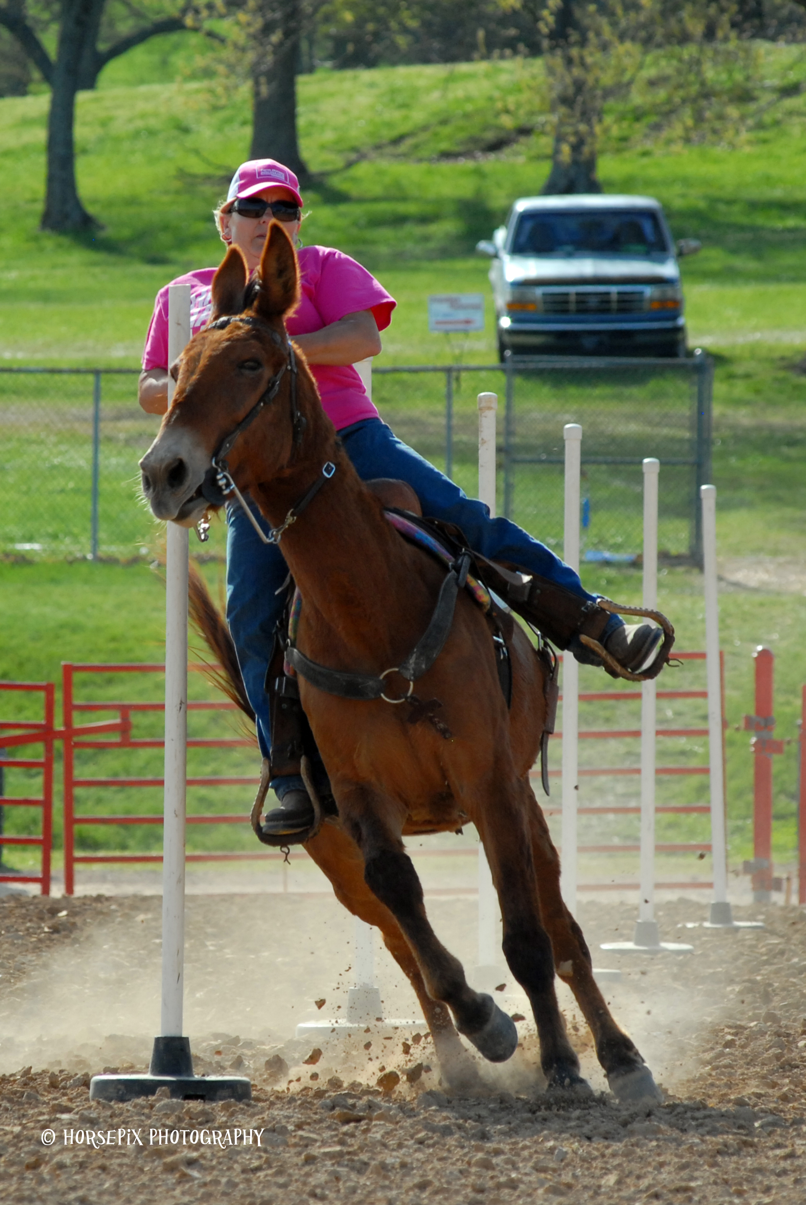 Riding Mule Show – Sunday 11:00 AM