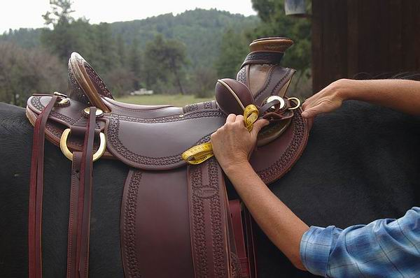 Saddle Placement