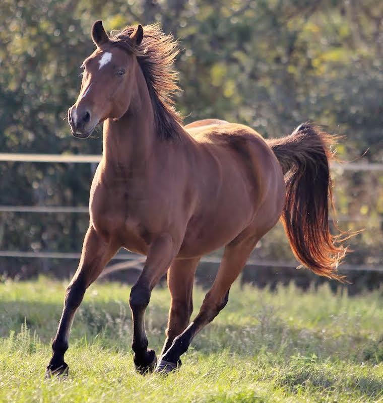 brick equine herb program testimonial