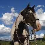 equine herbs for whole horse health