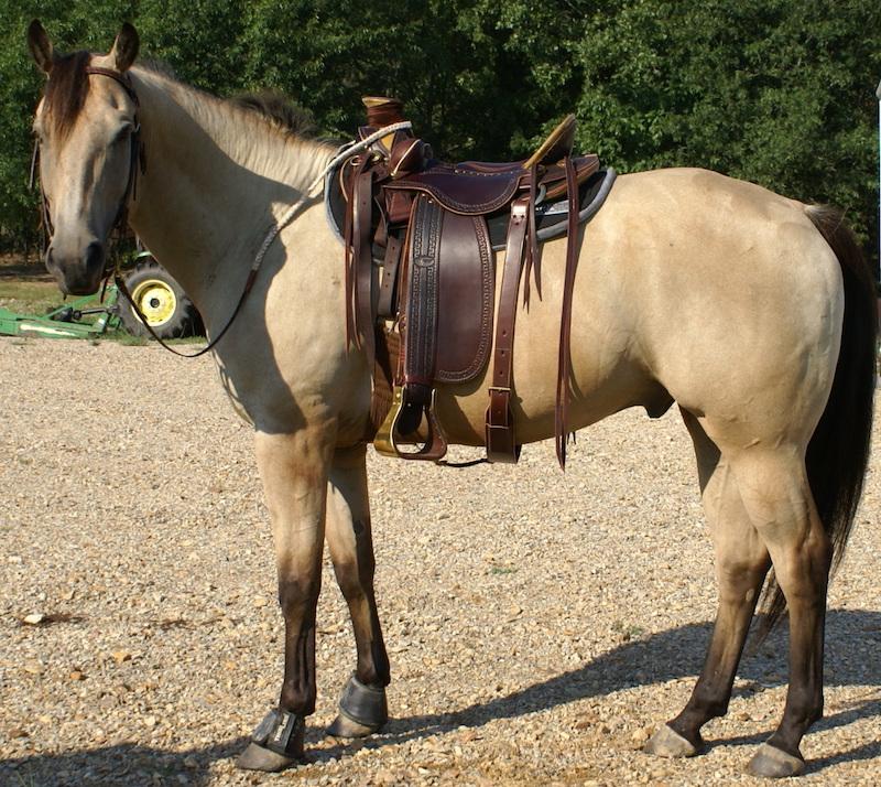 Dark brown extra wide western saddles