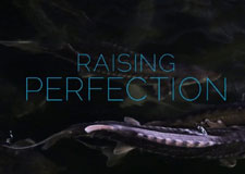 Thumbnail for Sterling Caviar – Raising Perfection