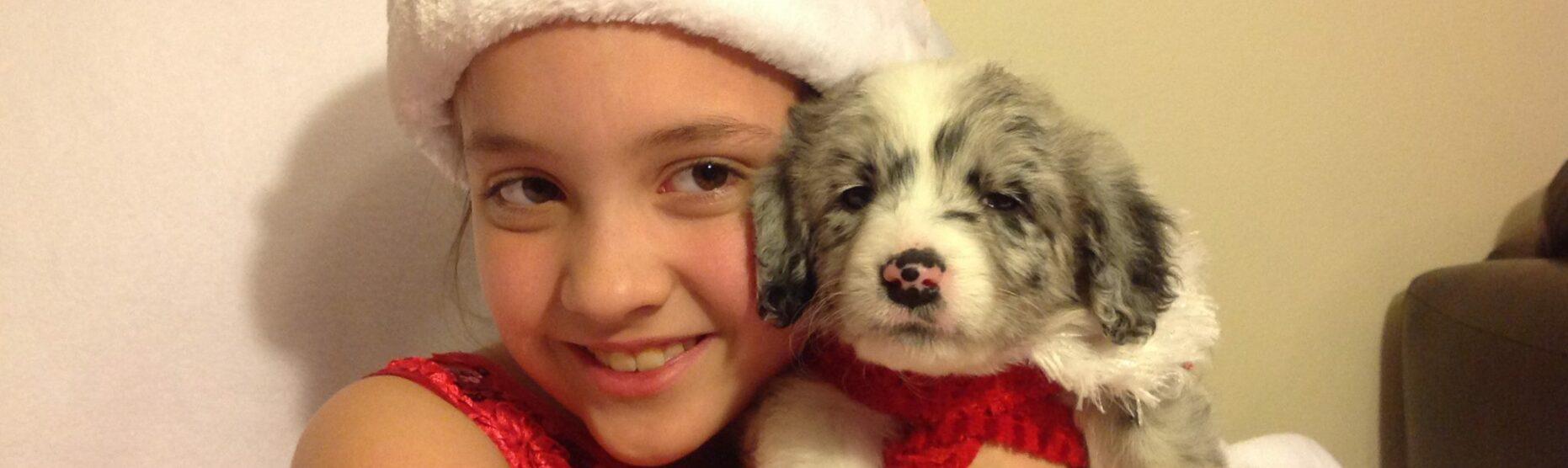 Southern Oregon Aussie Doodle Hypoallergenic Puppies - Australian Shepherd Poodle Puppies