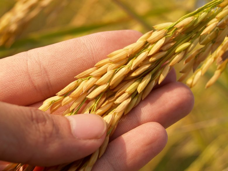 agriculture-blur-close-up-164504-e1552061853762.jpg