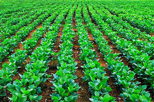 bg-agronomyslide-sm.jpg