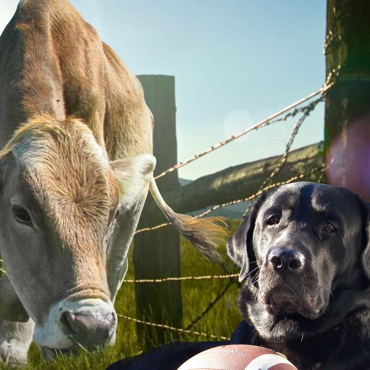 bg-farmhomegarden-sm02.jpg