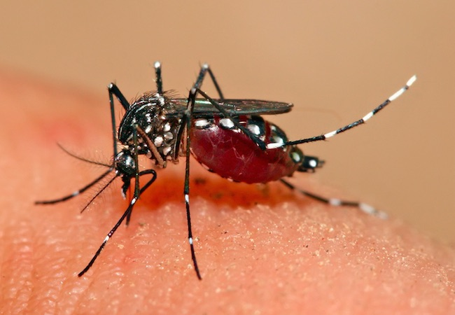 Photo of Taiwan reports more dengue cases