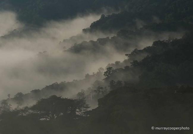 Photo of Ecuador endangered