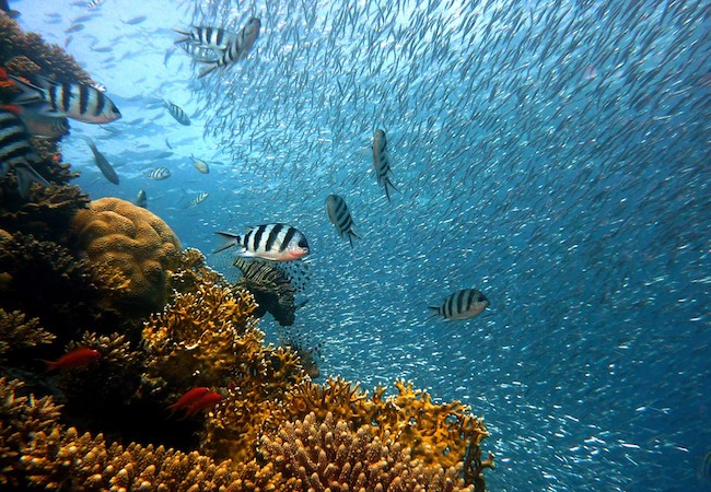 Photo of Coral reefs provide flood protection worth $1.8 billion every year – it's time to protect them
