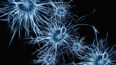 Photo of New autism research on single neurons suggests signaling problems in brain circuits