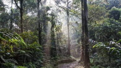 Photo of Our vanishing world: Rainforests