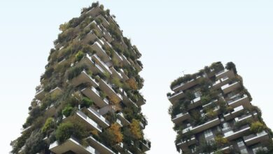Photo of Three ways to live a sustainable lifestyle in an urban city