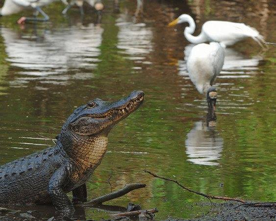 The Everglades and Adventures with Airboat Rides - Ride The Wind